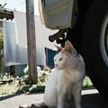 Photos: 猫撮り散歩2440