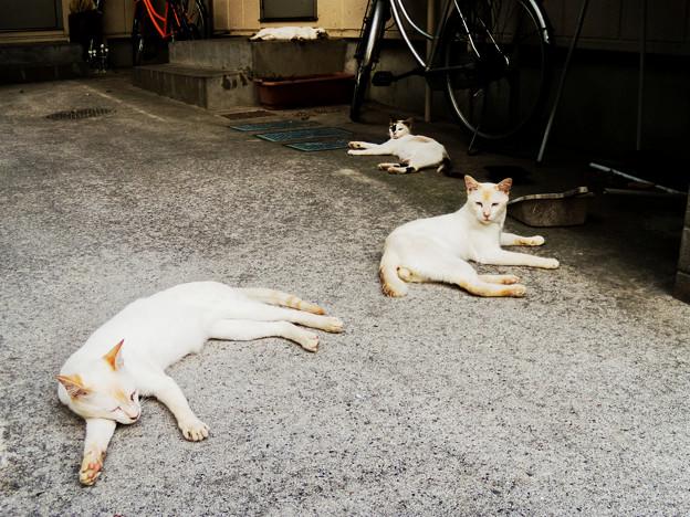 猫撮り散歩2441