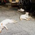 Photos: 猫撮り散歩2441