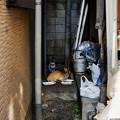 Photos: 猫撮り散歩2445