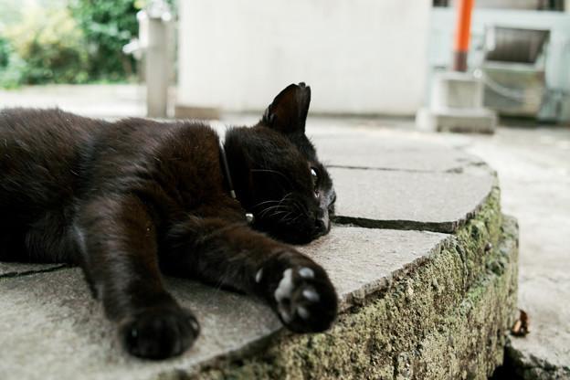 猫撮り散歩2447