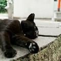 Photos: 猫撮り散歩2447