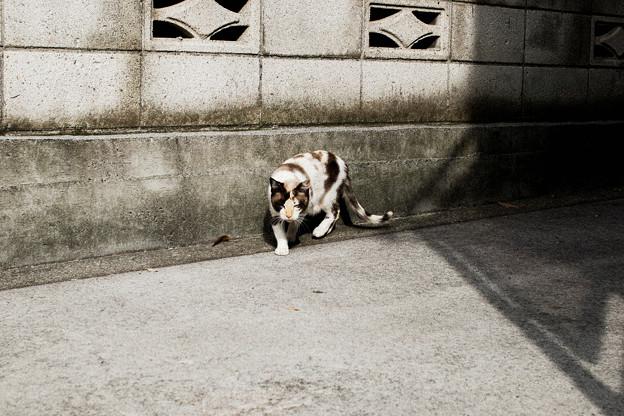猫撮り散歩2448