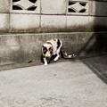 Photos: 猫撮り散歩2448