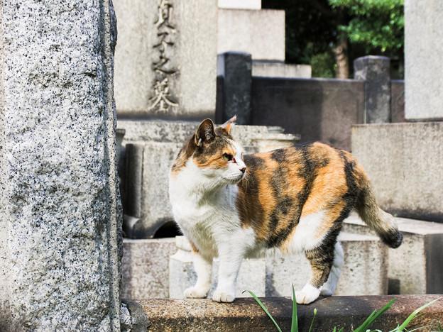 猫撮り散歩2449