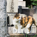 Photos: 猫撮り散歩2449