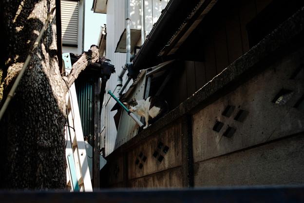 Photos: 猫撮り散歩2451