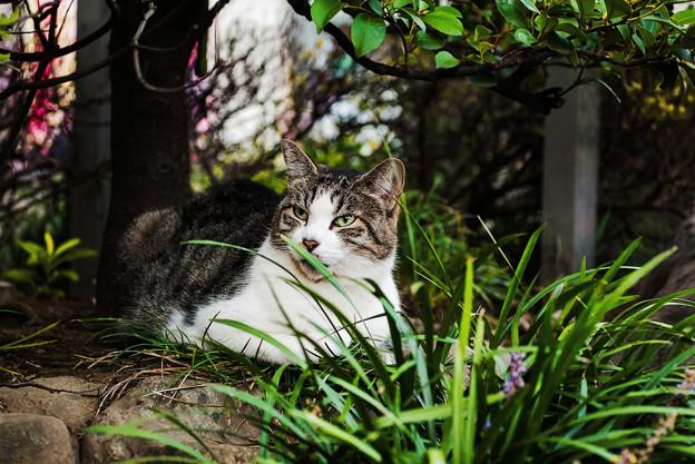 猫撮り散歩2456