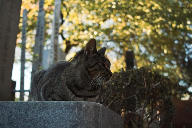 猫撮り散歩2462