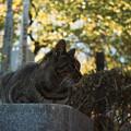 Photos: 猫撮り散歩2462