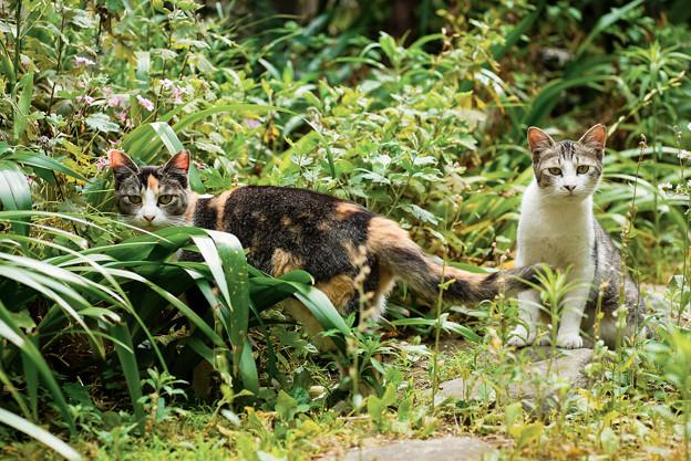 猫撮り散歩2463