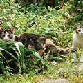 Photos: 猫撮り散歩2463