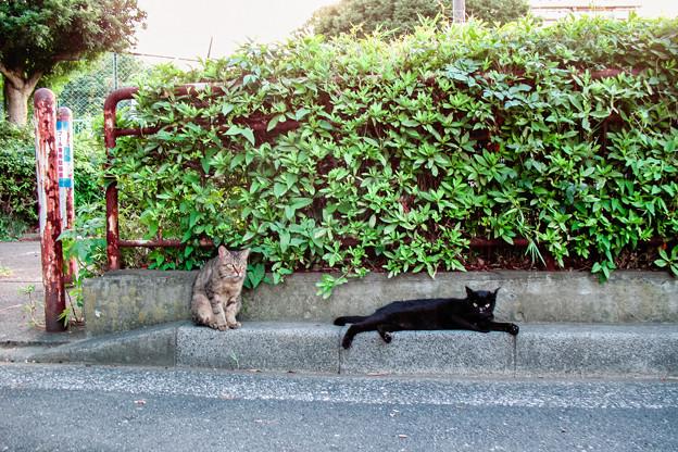 猫撮り散歩2469