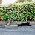 Photos: 猫撮り散歩2469
