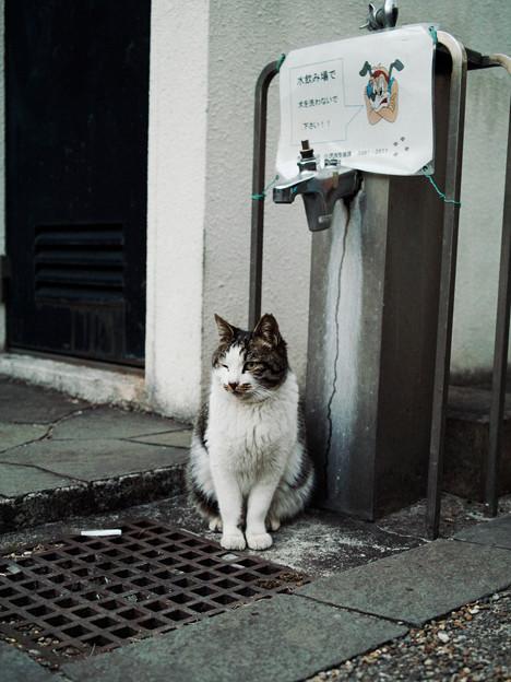 猫撮り散歩2470
