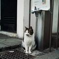 Photos: 猫撮り散歩2470