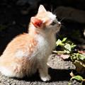 猫撮り散歩2472