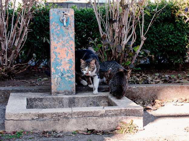 猫撮り散歩2473