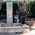 Photos: 猫撮り散歩2473