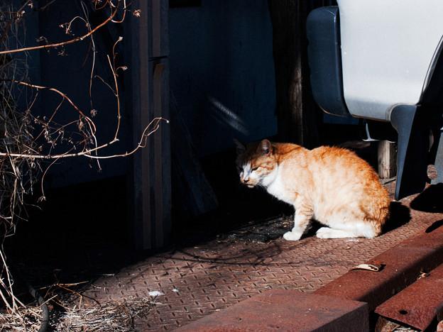 猫撮り散歩2475