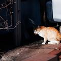 Photos: 猫撮り散歩2475