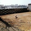 Photos: 猫撮り散歩2476