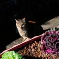 猫撮り散歩2477