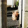 Photos: 猫撮り散歩2480