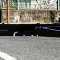 猫撮り散歩2481
