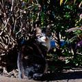 猫撮り散歩2483