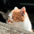 Photos: 猫撮り散歩2485
