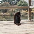 猫撮り散歩2486