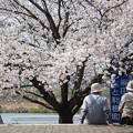 Photos: 桜の咲く頃