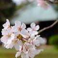 Photos: 田舎の春