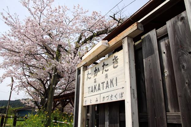 Photos: 高滝駅 駅名標と桜