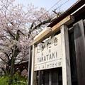 高滝駅 駅名標と桜