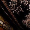 写真: 桜と寺院