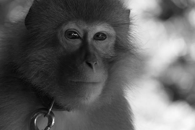 物憂げな猿