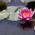 水辺に咲く