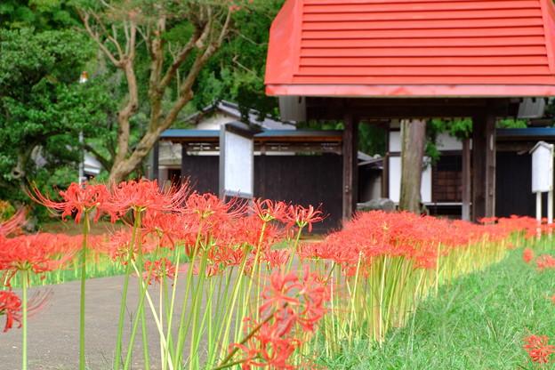 Photos: 結縁寺山門