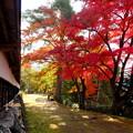 写真: 紅葉の径