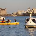 Photos: 千波湖