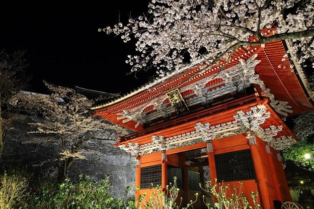 雨引観音 仁王門と桜