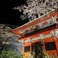 Photos: 雨引観音 仁王門と桜