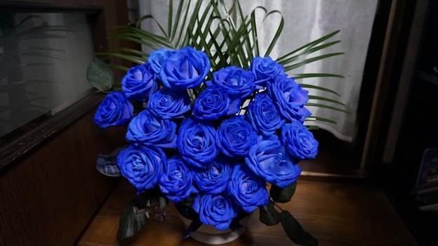Photos: 青いバラ