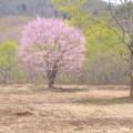 写真: 春惜しむ