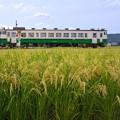 写真: 鉄と稲