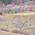 Photos: 浅春ノ景