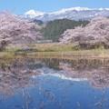Photos: みちのく...春