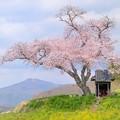 Photos: 春 想